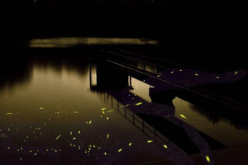 桃園賞螢活動:想去後慈湖、蝙蝠洞看螢火蟲嘛?記得報名 @桃園起風了